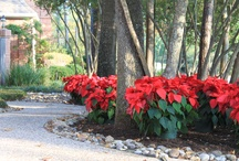 Christmas Garden / My husband surprised me with this gorgeous Christmas garden last year!    Colorful Environments,  Houston, Spring & The Woodlands, Texas  (281)370-4769
