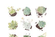 florystyczne/ organiczne