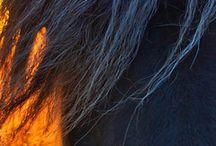 Equestrian / by Abby Mantz
