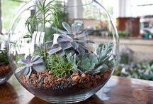 Suculentas / Flores y cactus