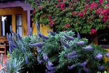Landscaping / Beautiful Gardens