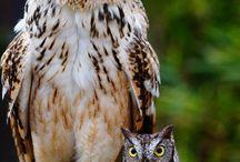 Фото - Птицы - Совы