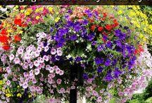 çiçekler...(flowers )