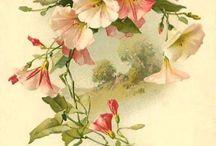 Virágok - madarak / pillangók \ Art \ üdvõzlõ kártyák