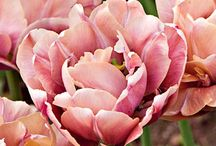 Little Garden / Peonies.Ranunculus.Hydrangea.etc+