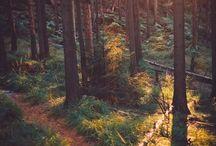 Outdoors / by Rachel Tekunoff