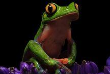 Astonishing Frogs