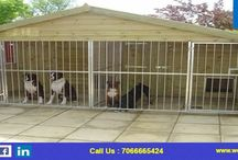 Dog Kennels in Pune