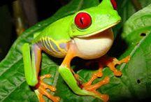 frogs art  assignment