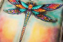 uç uç böceği