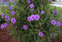 hug house - garden plants.