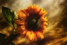 obrazky kvety
