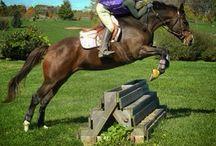 DEFHR Success Stories / DEFHR horses who have found loving homes.