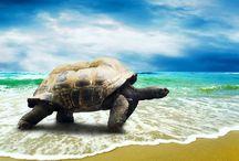 Všechno nejlepší k svátku, želvy! / Věděli jste, že i želvy mají svůj den? Od roku 2000 slavíme 23. května jako Světový den želv. Tento den se nese v duchu boje za jejich ochranu, protože i když jsou to houževnatá zvířata žijící i přes sto let, stávají se oběťmi průmyslového rybolovu. V sítích tak ročně končí až 20 milionů tun želv jako nechtěný úlovek.