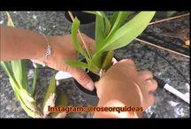 Orquidea! / Manutenção..cuidados e cultivo de orquídeas!