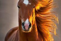 horses <3 / by Ariel Ploch