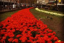Netherlands / Pics taken in April 2006.
