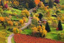 Colored Fall...