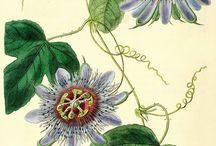 Botanical Art / The beauty of aesthetic botanical painting and drawing