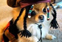 Mis Puppy Dogs / by Vanessa Joy