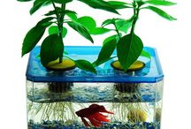 aquarium crazy / my obsession with aquariums now / by Pamela Weith