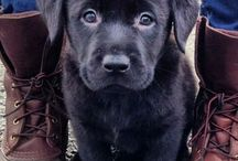 Black Pups / by Marta Martinez Rubio