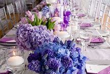 Purple & Blue Hues