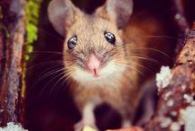 Animaux *o* / Les plus belles et connus photos d'animaux *o*