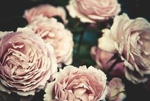 Fabulous Flowers / a board of gorgeous flowers and luxe flora  / by Parisa Na