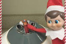 Elf on a Vet Clinic Shelf