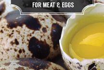 Egg and Breakfast Farm