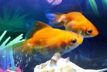 Aquarium related stuff & info