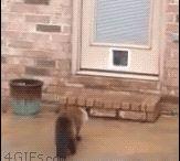 À hauteur de chat