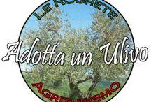 Adotta un ulivo Le Roghete / Gli alberi dell'azienda Le Roghete diventano adottabili. Contribuendo così asalvaguardare un patrimonio naturale sempre più minacciato dall'industrializzazione. www.leroghete.it info@leroghete.it