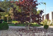 ogród na glinie