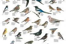 Fugler på matfatet