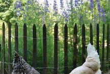Chicken garden fence ideas