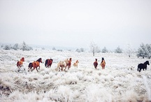 Horses <3 / by Katie Alabsi