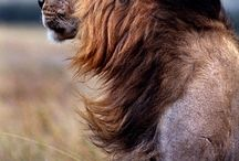manes and anatomy