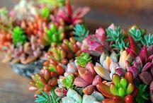 Photograph (Plants)