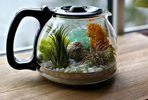 Small aquariums and  terrariums / Small aquariums, plants, fish and more