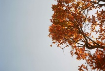 Fall into Autumn / by Ashley Taylor