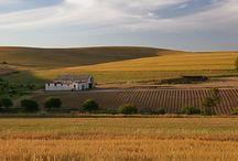 Malmesbury - Harvest