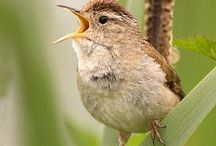 Birds / #oiseaux #birds