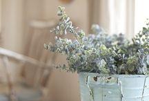 STYLING / Green Plant, Pot
