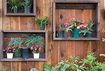 Backyard/Gardening / by Jennifer Nichols