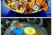 Zahrada - motýli