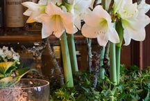 aranjament de flori (plantate)