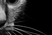 Cat / by Beth dos Santos