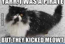 Cats&cats